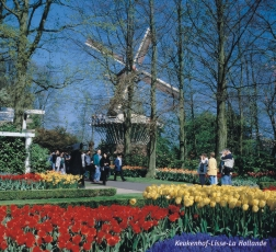 Kukenhof Gardens in Spring Time